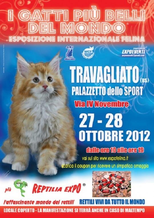 I gatti più belli del mondo-2012- travagliato