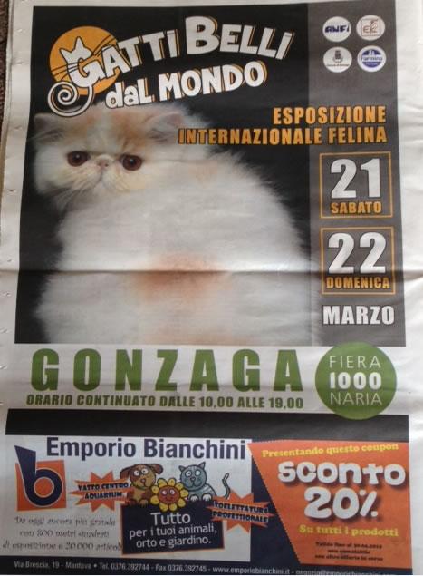 Gatti Belli dal Mondo a Gonzaga (MN)