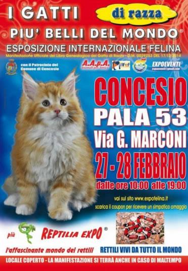 I Gatti più Belli del Mondo a Concesio