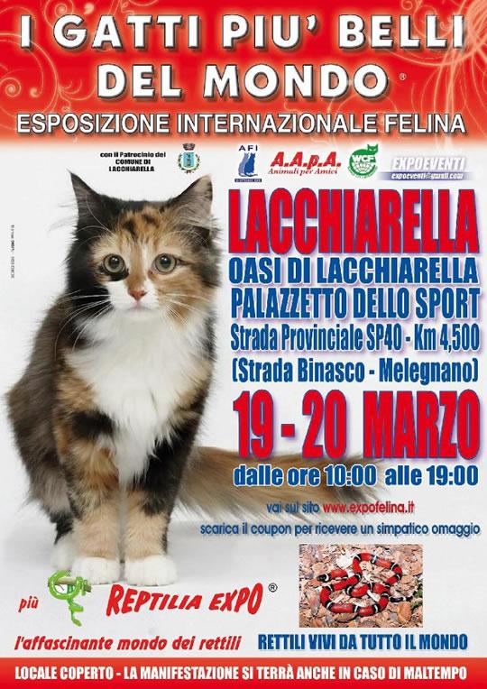 I Gatti più Belli del Mondo e Reptilia Expo a Lacchiarella MI