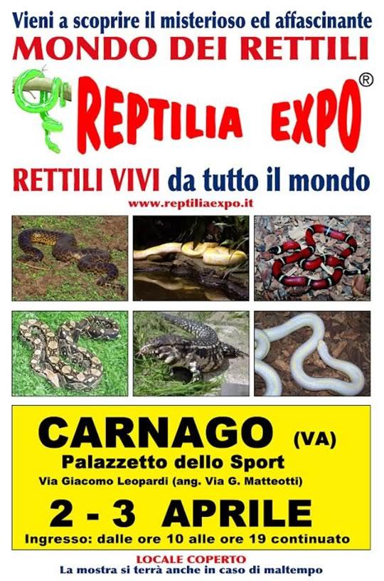 I Gatti più Belli del Mondo e Reptilia Expo a Carnago VA