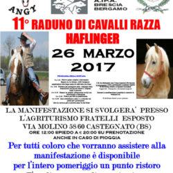 11 Raduno di Cavalli di Razza Haflinger a Castegnato