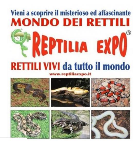 Reptilia Expo a Mazzano