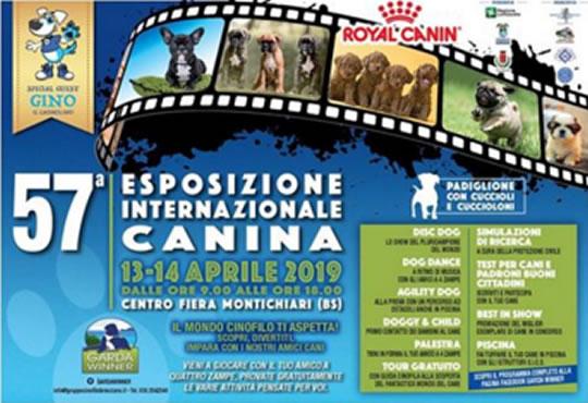 Esposizione Internazionale Canina a Montichiari