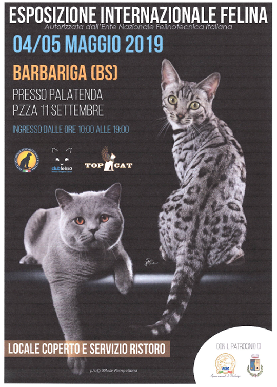 Esposizione Internazionale Felina a Barbariga