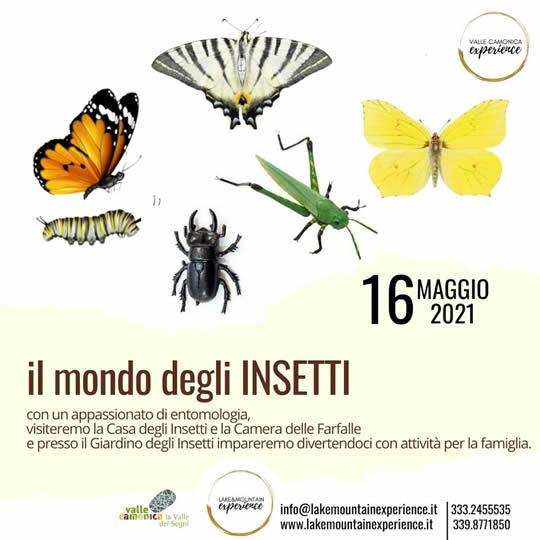 il modo degli insetti